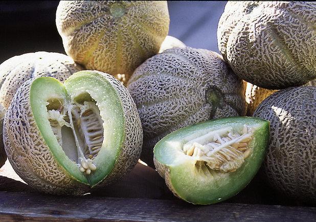 Melon_Edens Gem.jpg