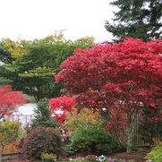 Foto de Amazing Maples
