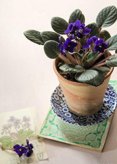 Le 8 piante da appartamento facili facili per i negati del verde - Piante da appartamento resistenti e decorative ...