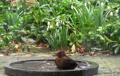 How to Introduce Water Features in Gardens