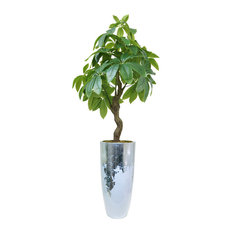 "49.5"" Pachira Aquat Real Touch, Indoor/Outdoor in Fiberstone Planter"