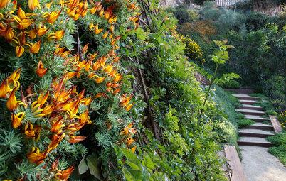 12 Piante Coprisuolo Che i Giardinieri Usano per Creare Armonia