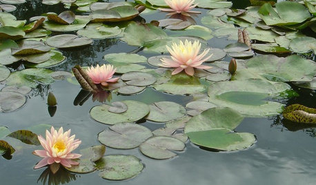 Which Plants Should I Choose for my Garden Pond?