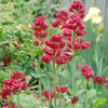 6 Lovely Water-Wise Perennials for High Altitudes