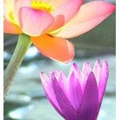 Silk flower depot houzz silk flower depot mightylinksfo