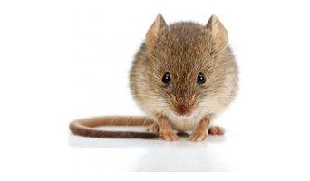Apex Pest Control - Barnsley