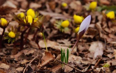 Great Lakes Gardener's February Checklist
