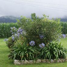 Jardín de la semana: Un paraíso entre valles siempre verdes