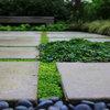Fråga experten: Hur bekämpar jag ogräset mellan trädgårdsplattorna?
