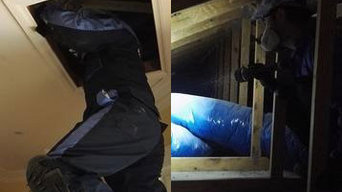 Pest Control and Termite Treatment in North Sydney