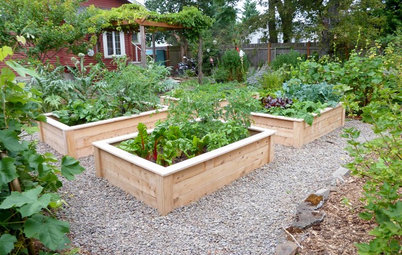 What to Do in Your Edible Garden After the Summer Harvest