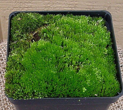 How To Grow Moss In Florida