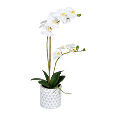"21"" White Phalaenopsis, Pot"