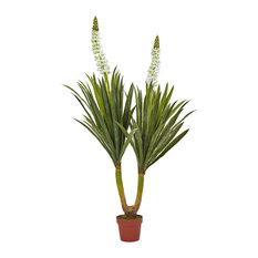 Flowering Yucca Plant