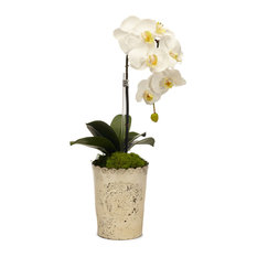 Orchid in Vintage Mercury Glass, White