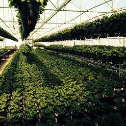 Nursery Tree Farm Oklahoma City Ok