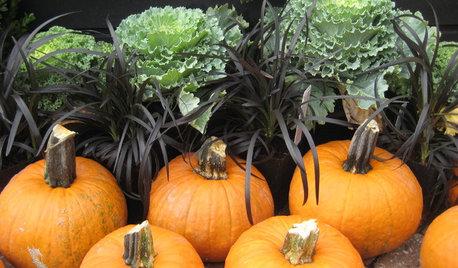 10 Boo-tiful Black Plants for Halloween