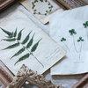 庭の草花で作る、アンティークの標本風ボタニカルアート