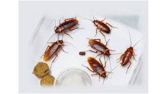Pest Control Morley
