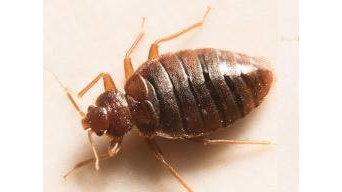 Pest Control Menai