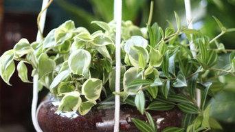 Jungle Bowl : Peperomia Duo (Beetle + Obtusifolia Variegata)