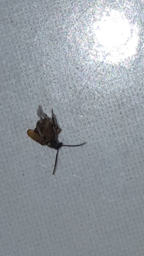 Flying Bugs In My Kitchen