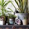 Undgå de typiske fejl – 10 ting, som dine stueplanter hader