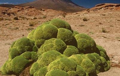 Let Nature Inspire Your Landscape: Devise a Desert Garden