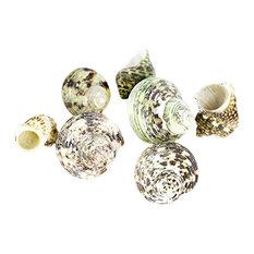 Various Natural Beach Sea shells Appox. 8oz Per Bag Turbo