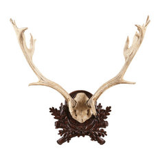 LARGE FALLOW ANTLER PLAQUE