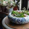 Quick DIY Project: 3 Ways to Show Off Your Succulents