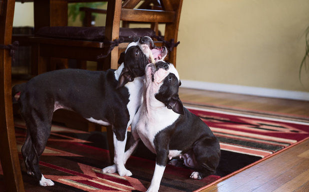 Pet's Place: Maggie and Orbit