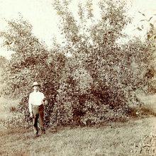 Plants of Laura Ingalls Wilder