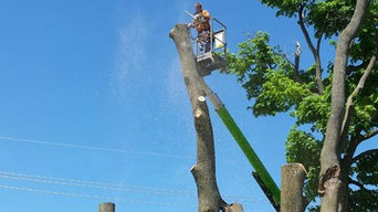These are some of Lthe projects started and completed by coffmans tree service
