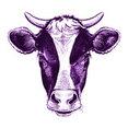 Purple Cow Property Media's profile photo