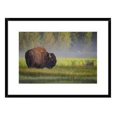 """Bison In Morning Light"" Artwork, 28""x20.7"""
