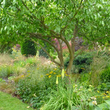 A Beginner's Guide to Adding Trees to Your Garden