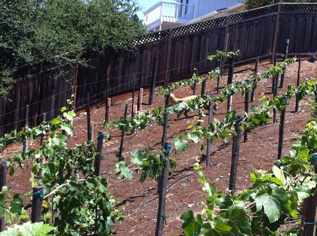 Small Backyard Vineyard how to start a home vineyard