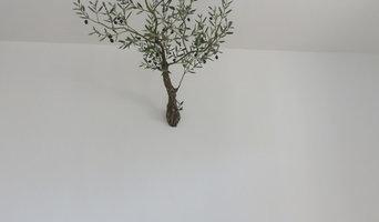 l'olivier dans la maison