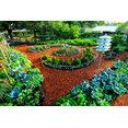 Easy Edible Landscapes-Organic Garden Design's profile photo