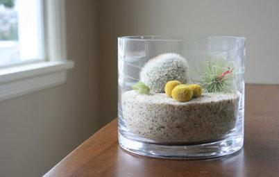 Guest Picks: More Ideas for Artful Terrariums