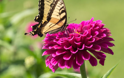 20 Favorite Flowers for Butterflies and Bouquets