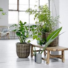 Inspiration: Tilbehør til boligen - En spirende plantetrend