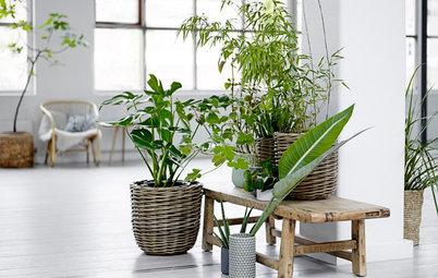 Hvordan indretter man bedst med grønne planter?