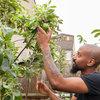 Lush, Foodie Abundance in a Small Urban Garden
