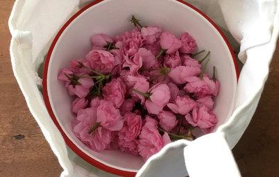 自家製の桜の塩漬けを作ってみよう!