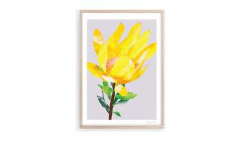 Golden Conebush Art Print