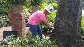 Tree Fertilization