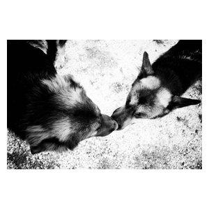 """""""Love"""" Photo Print, Canvas Print, 60x40 cm"""