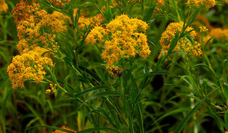 This Sunny Yellow Flower Helps Fall Pollinators and Landscapes